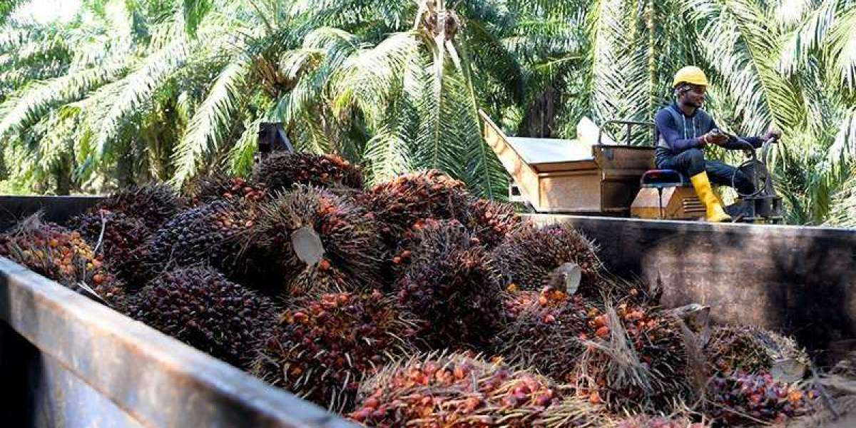 India's palm oil imports from Malaysia go up 23% in January